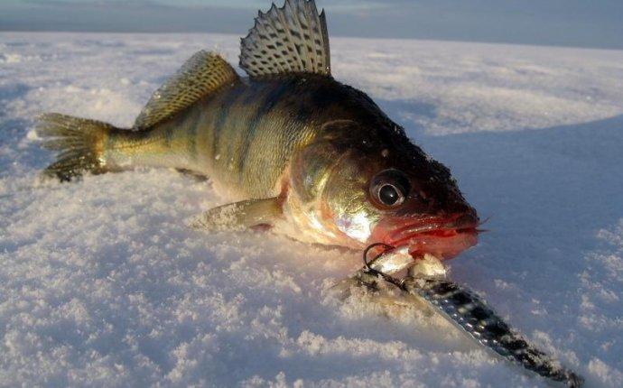 Зимняя рыбалка на судака на
