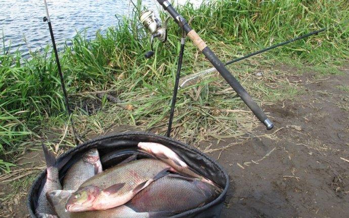 лучшая наживка для рыбы!