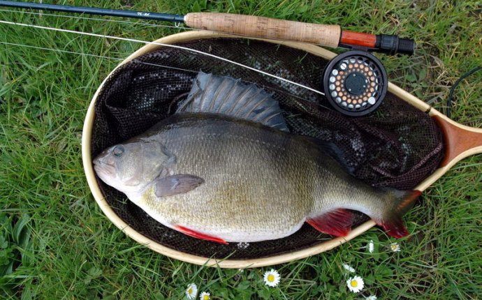 Рыбалка на окуня зимой и летом – интересный процесс, вкусный улов