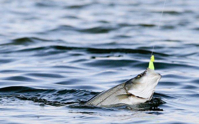 Рыбалка в Калининградской