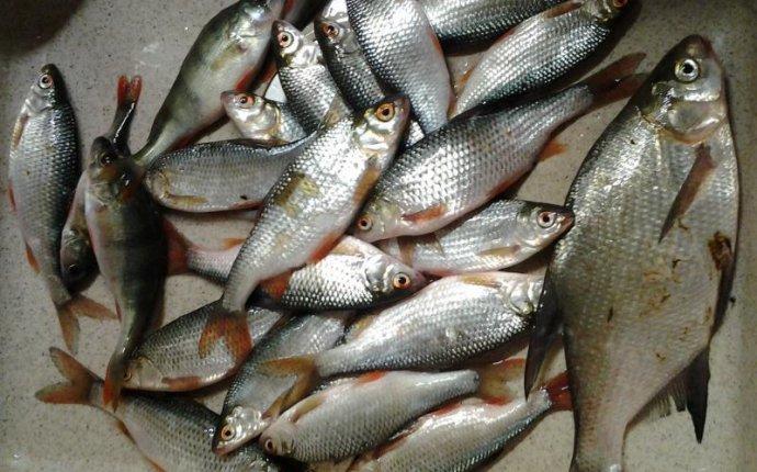 Рыбалка в подмосковье - отчеты о рыбалке в области, видео, прогноз