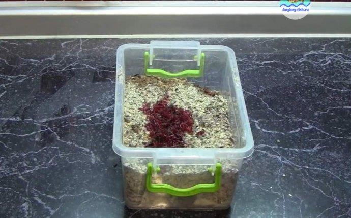 Зимняя прикормка для леща своими руками рецепт + видео
